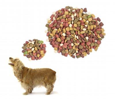 dog thinking of food