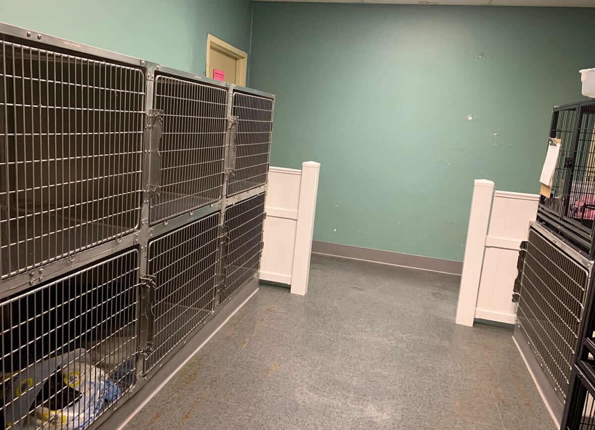dog kennels for boarding at Pet Dynasty in Pleasanton
