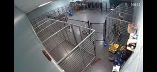 live camera still from large dog runs at Pet Dynasty in Pleasanton