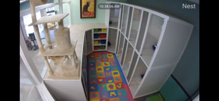 cat boarding live camera webcam Nest, at Pet Dynasty in Pleasanton