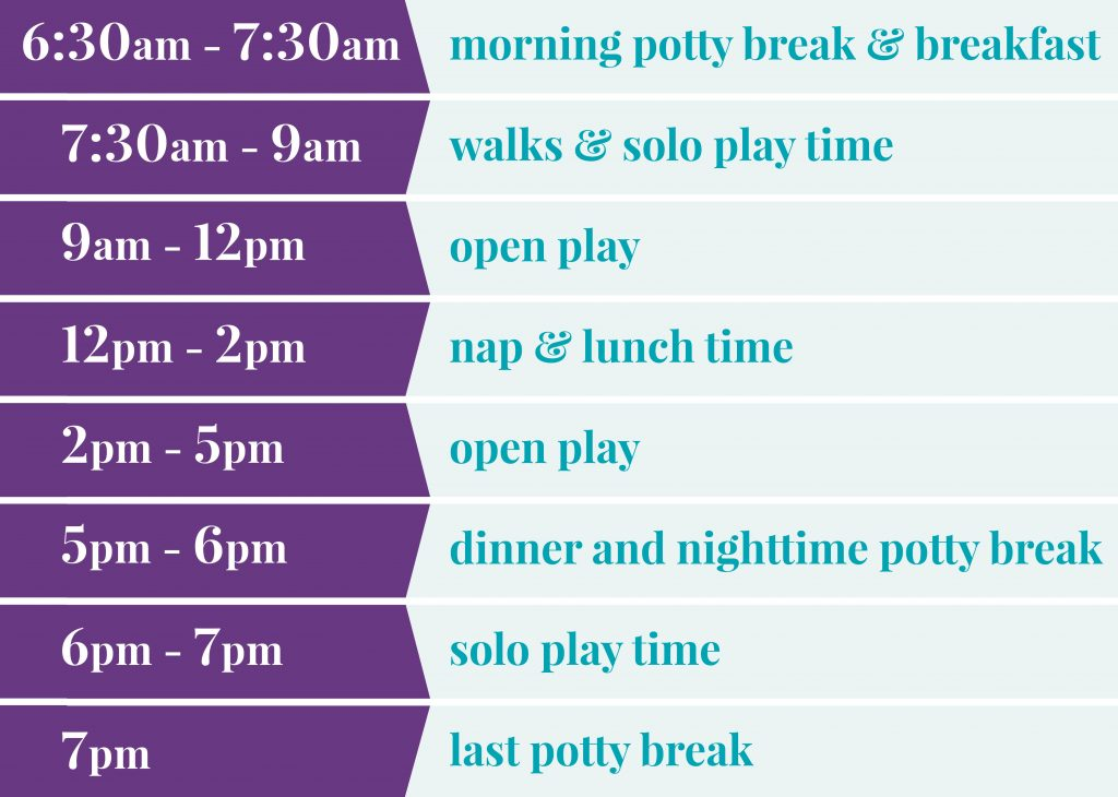 6:30-7:30 am morning potty break & breakfast; 7:30-9am walks & solo play time; 9am-12pm open play; 2-5pm open play; 5-6pm dinner & nighttime potty break; 6-7pm solo play time; 7pm last potty break&tuck-in